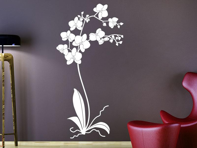 Wandtattoo Orchideenpflanze